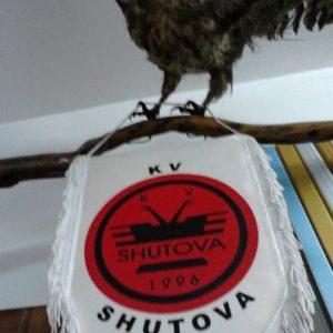 shutova11